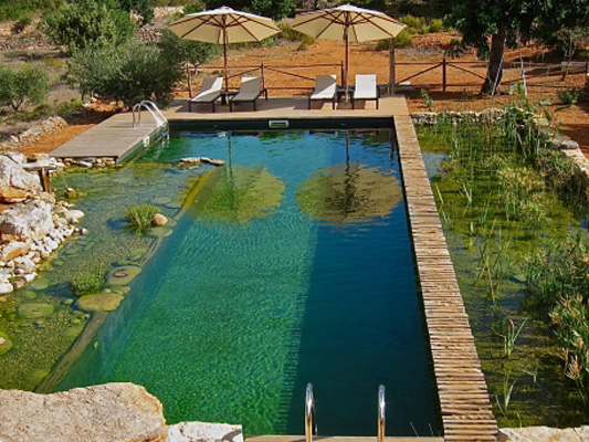 Swimming Ponds and Fish Farming